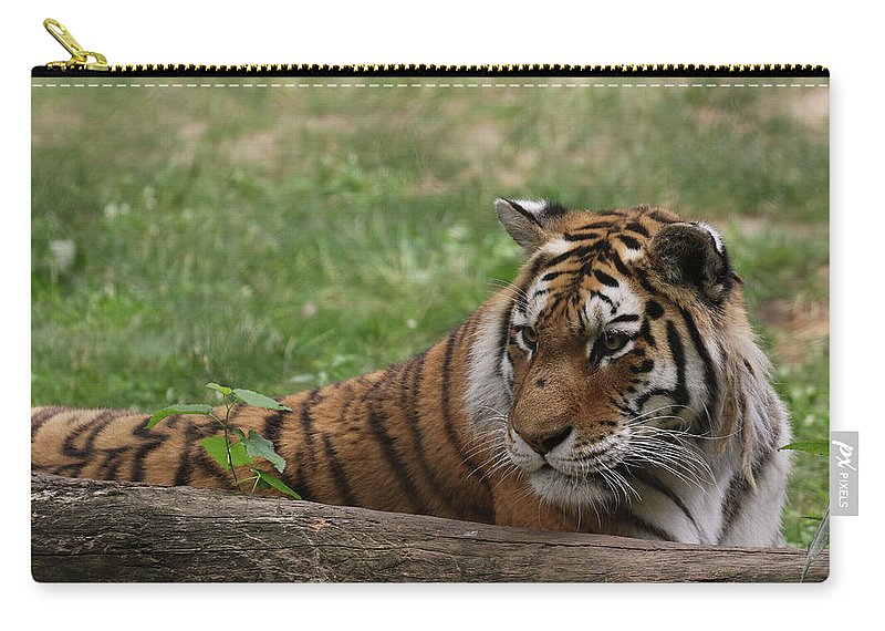Amur Tiger Carry-all Pouch featuring the photograph Alert by Norman Saagman