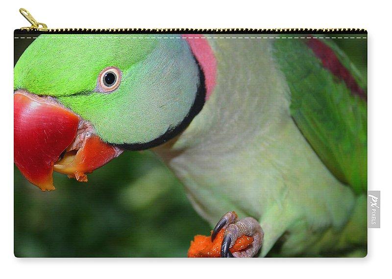 Alexandrine Parrot Carry-all Pouch featuring the photograph Alexandrine Parrot Feeding by Ralph A Ledergerber-Photography
