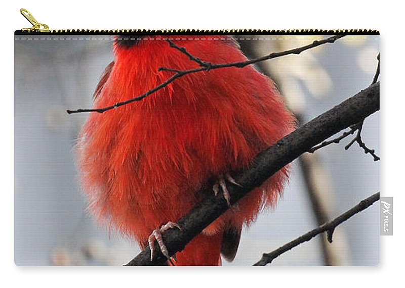 Cardinal Carry-all Pouch featuring the photograph All Fluff by Jennifer Robin