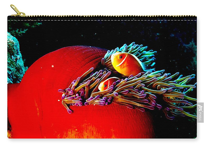 Anemone Carry-all Pouch featuring the photograph All Tucked In by Mumbles and Grumbles