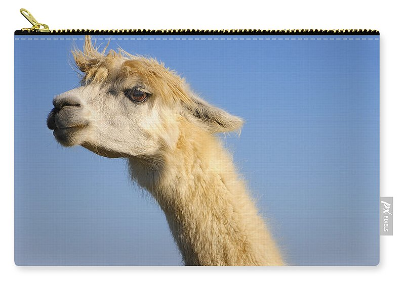 Skip Hunt Carry-all Pouch featuring the photograph Alpaca by Skip Hunt