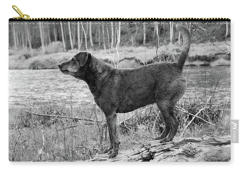 Dog Carry-all Pouch featuring the photograph Always Ready For Fun by Donna Blackhall