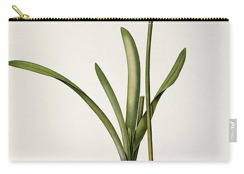 Amaryllis Carry-all Pouch featuring the drawing Amaryllis Curvifolia by Pierre Redoute