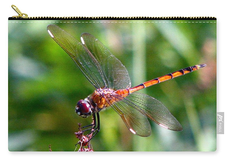 Amber Wing Carry-all Pouch featuring the photograph Amber Wing 2 by J M Farris Photography