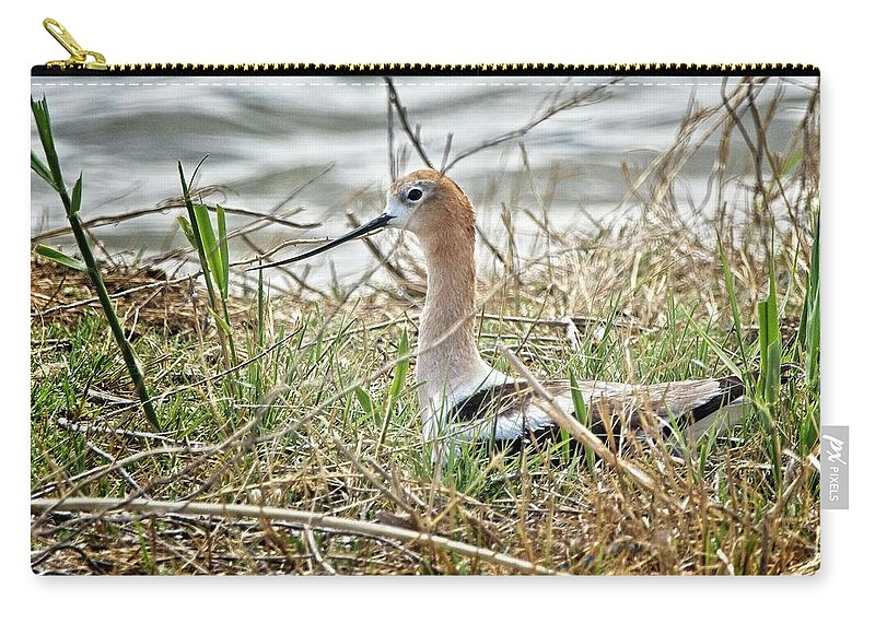 Bird Carry-all Pouch featuring the photograph American Avocet by Rick Graham