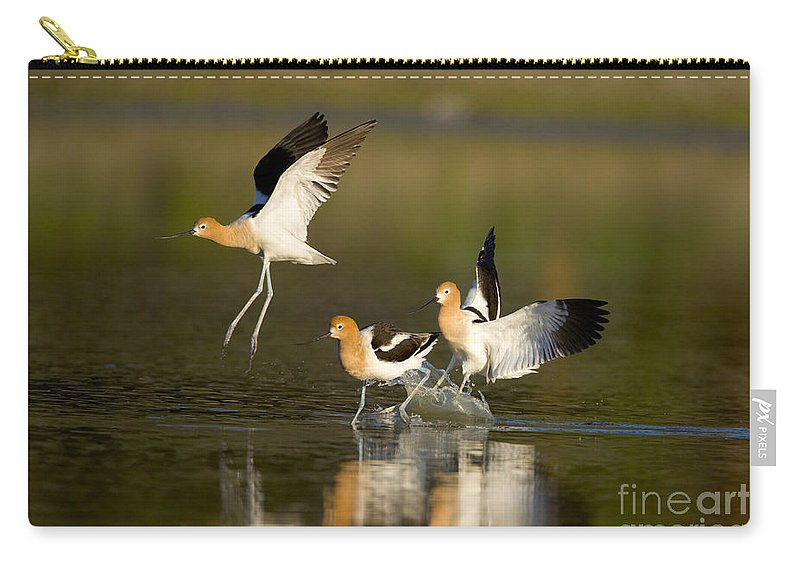 American Avocet Carry-all Pouch featuring the photograph American Avocets by Marie Read