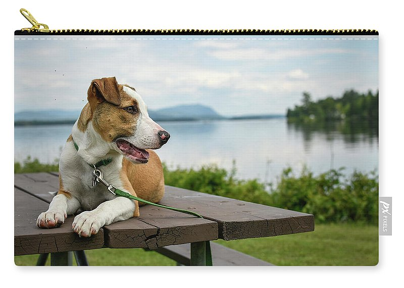 Hound Dog Carry-all Pouch featuring the photograph American Breed On Table by Justin Mountain