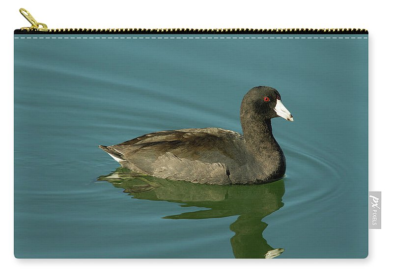 Coot Carry-all Pouch featuring the photograph American Coot by Paul Rebmann