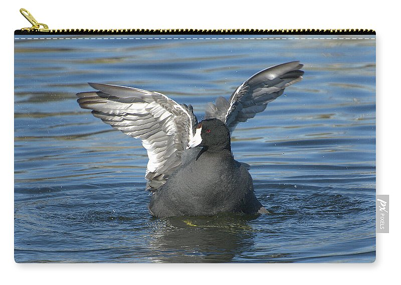 American Coot Carry-all Pouch featuring the photograph American Flapper by Fraida Gutovich