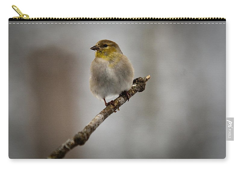 American Carry-all Pouch featuring the photograph American Golden Finch Winter Plumage by Douglas Barnett