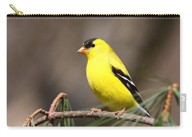 Goldfinch Carry-all Pouch featuring the photograph American Goldfinch II by Bruce J Robinson