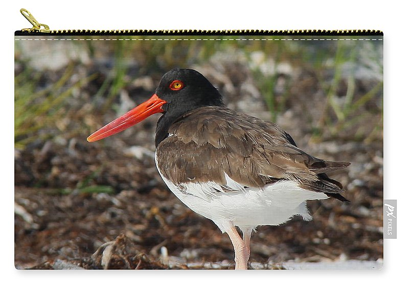 American Oyster Catcher Carry-all Pouch featuring the photograph American Oyster Catcher by Barbara Bowen