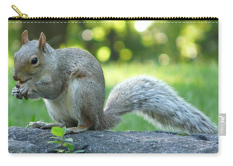 New York Carry-all Pouch featuring the photograph American Squirrel by Valerie Ornstein