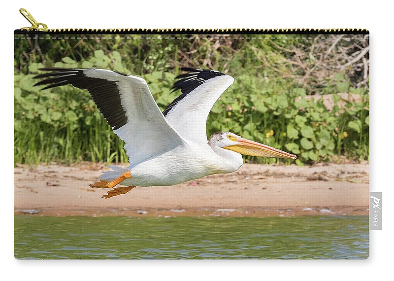 Pelican Carry-all Pouch featuring the photograph American White Pelican Above The Water by Tony Hake