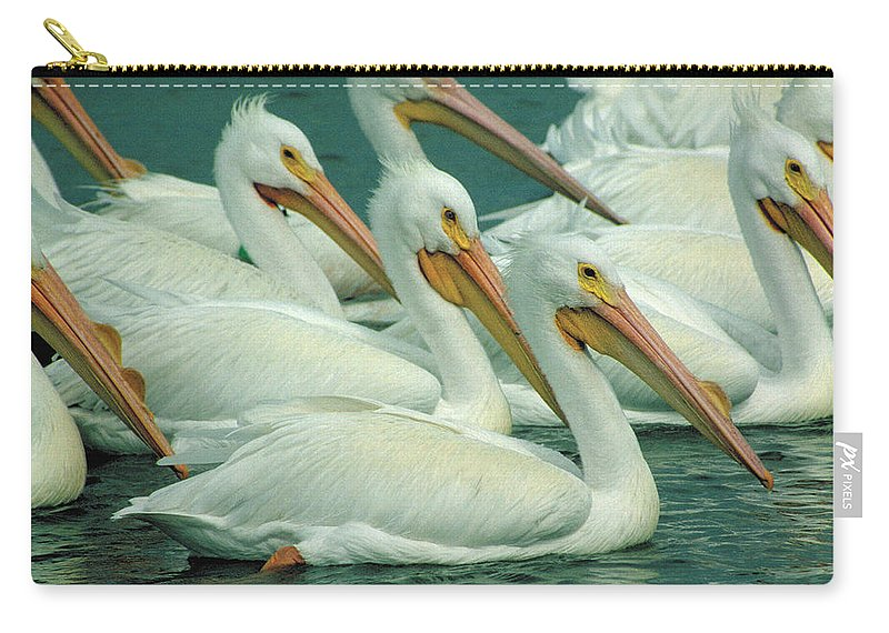 White Pelicans Carry-all Pouch featuring the photograph American White Pelicans by Bruce Morrison