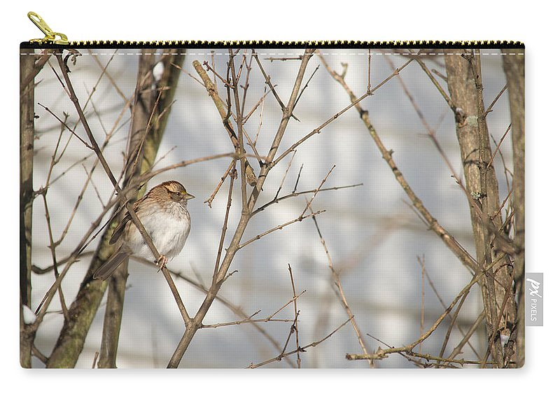 White Throated Sparrow Carry-all Pouch featuring the photograph Amongst The Branches by Nancy Comley