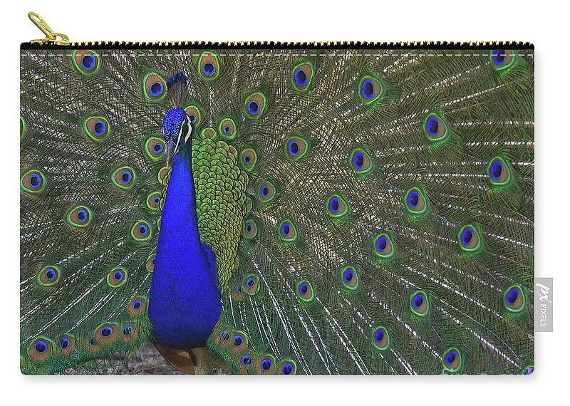 Indian Peacock Carry-all Pouch featuring the photograph An Eye For An Eye by Debby Pueschel