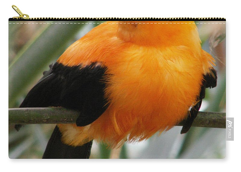 Bird Carry-all Pouch featuring the photograph Andean Cock Of The Rock by Amy Fose