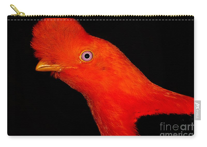 Fauna Carry-all Pouch featuring the photograph Andean Cock Of The Rock by Dant� Fenolio
