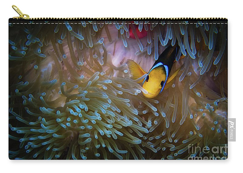 Bora Bora Carry-all Pouch featuring the photograph Anemonefish by Doug Sturgess