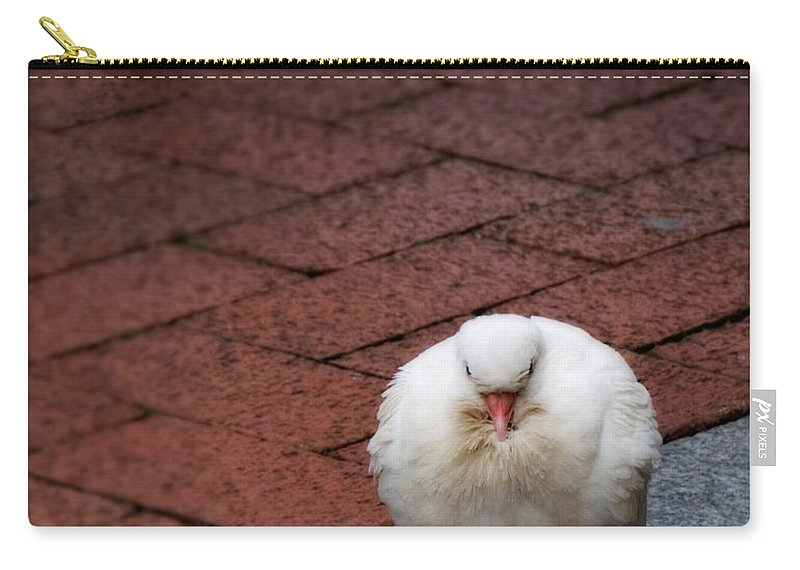 Bird Carry-all Pouch featuring the photograph Angel Of The City by Jay Taylor