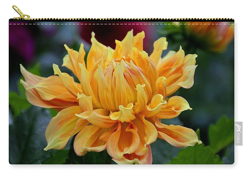 Dahlia Carry-all Pouch featuring the photograph Angel's Obsession by Michiale Schneider