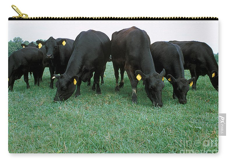 Angus Cattle Carry-all Pouch featuring the photograph Angus Cattle by Science Source