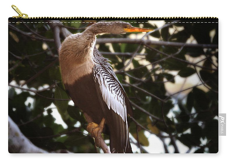 Anhinga Carry-all Pouch featuring the photograph Anhinga Water Fowl by Joseph G Holland