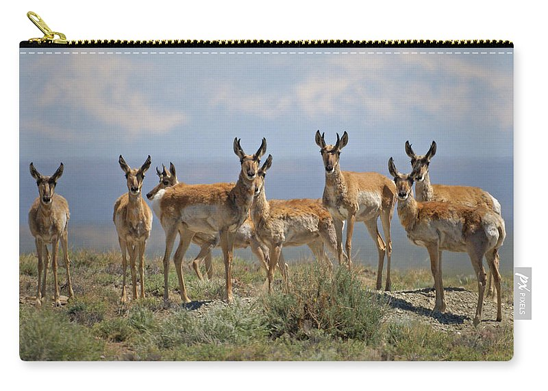 Antelope Carry-all Pouch featuring the photograph Antelope by Heather Coen