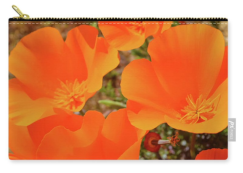 Antelope Valley California Poppy Reserve Carry-all Pouch featuring the photograph Antelope Valley Poppy Portrait by Kyle Hanson