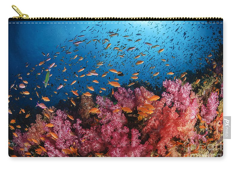Animals In The Wild Carry-all Pouch featuring the photograph Anthias Fish And Soft Corals, Fiji by Todd Winner