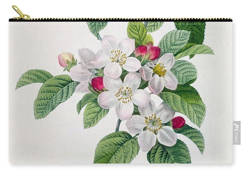 Apple Carry-all Pouch featuring the painting Apple Blossom by Pierre Joseph Redoute