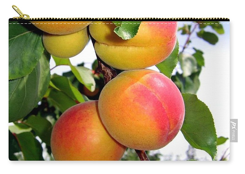 Apricots Carry-all Pouch featuring the photograph Apricots by Will Borden