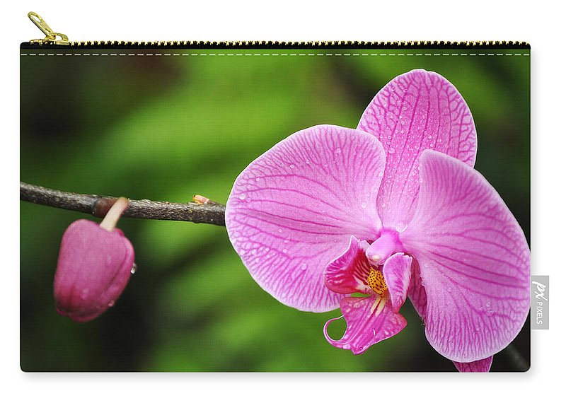 Los Angeles County Arboretum Carry-all Pouch featuring the photograph Arboretum Tropical House Orchid by Kyle Hanson