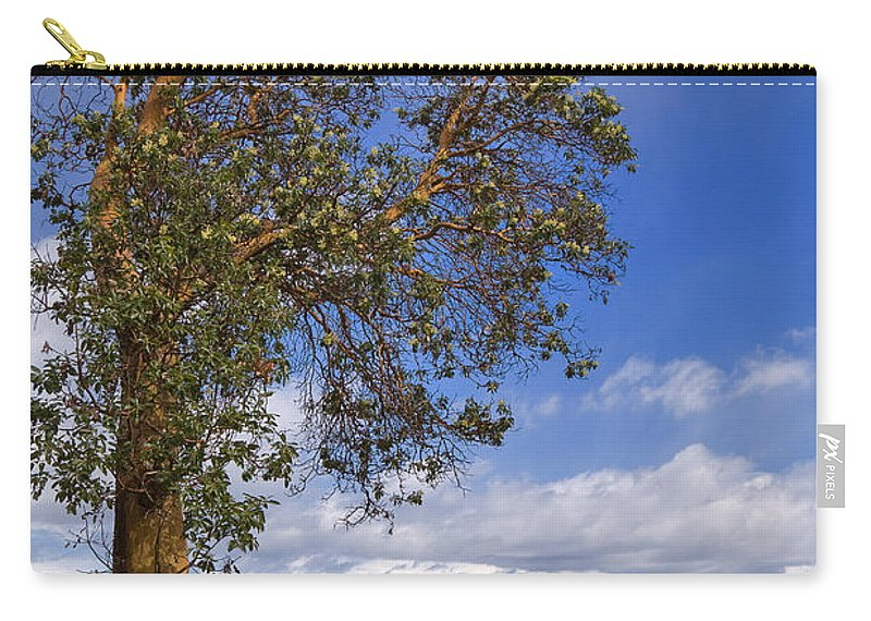 Tree Carry-all Pouch featuring the photograph Arbutus Tree At Rathtrevor Beach British Columbia by Louise Heusinkveld