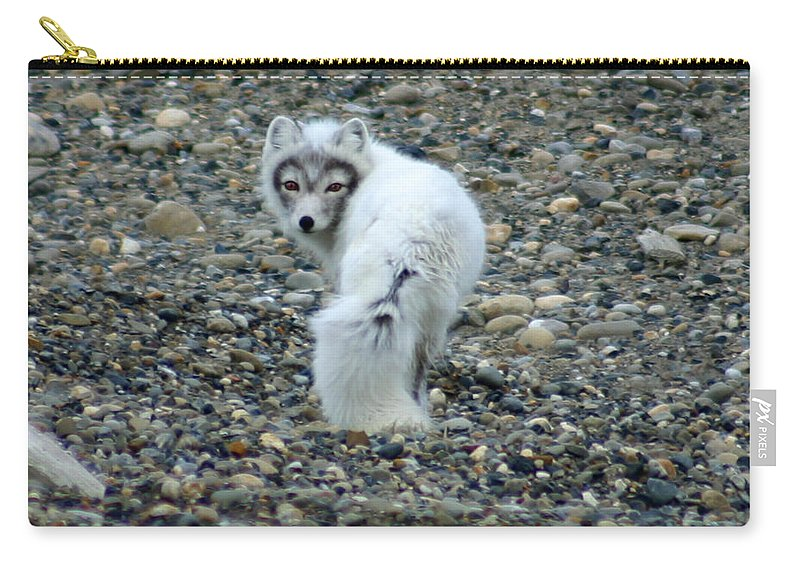 Alaska Carry-all Pouch featuring the photograph Arctic Fox by Anthony Jones