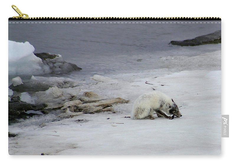 Arctic Fox Carry-all Pouch featuring the photograph Arctic Fox Eating by Anthony Jones