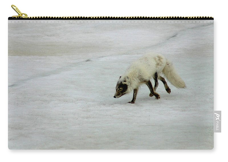 Arctic Fox Carry-all Pouch featuring the photograph Arctic Fox On Ice by Anthony Jones