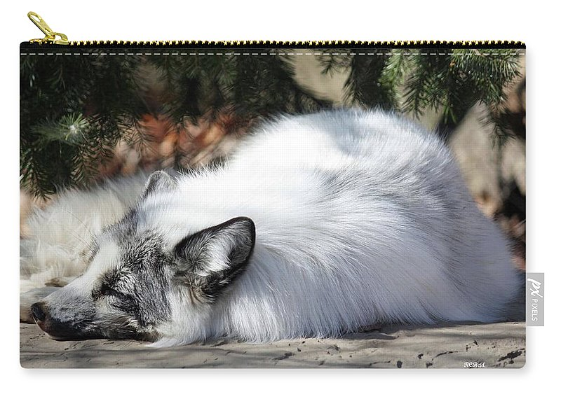 Maryland Carry-all Pouch featuring the photograph Arctic Fox by Ronald Reid