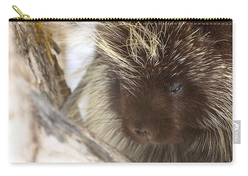 Porcupine Carry-all Pouch featuring the photograph As Soft As A Pincushion by DeeLon Merritt