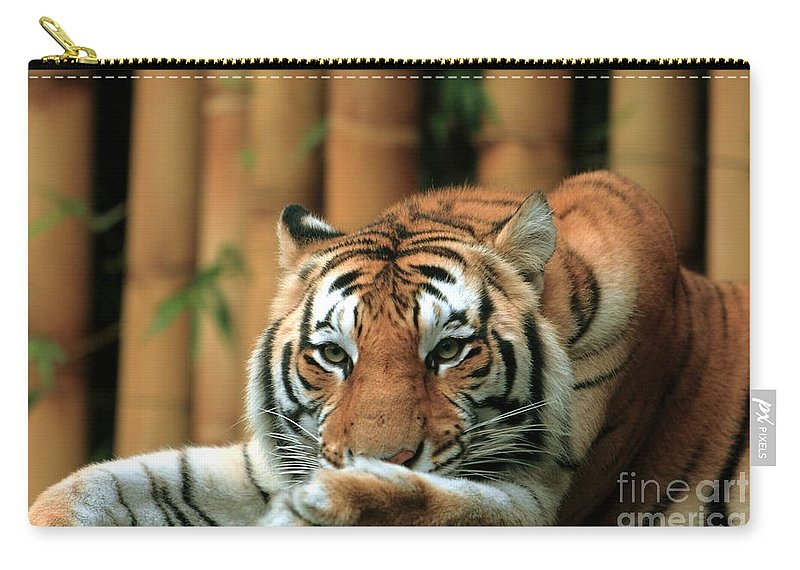 Tiger Carry-all Pouch featuring the photograph Asian Tiger 5 by Randy Matthews