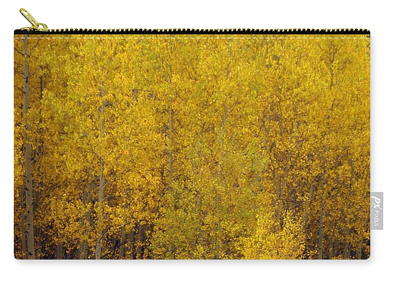 Fall Colors Carry-all Pouch featuring the photograph Aspen Fall 2 by Marty Koch