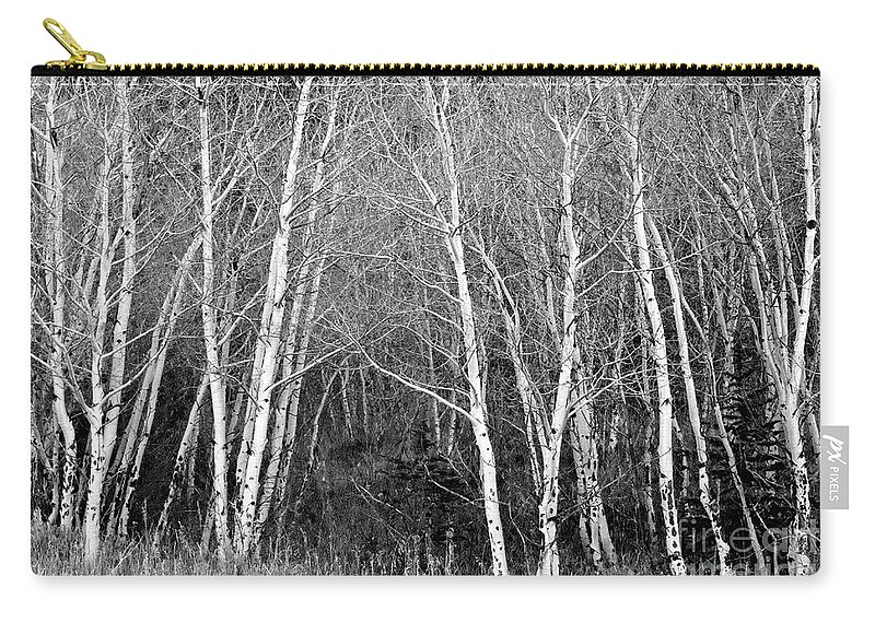 Aspen Carry-all Pouch featuring the photograph Aspen Forest Black And White Print by James BO Insogna