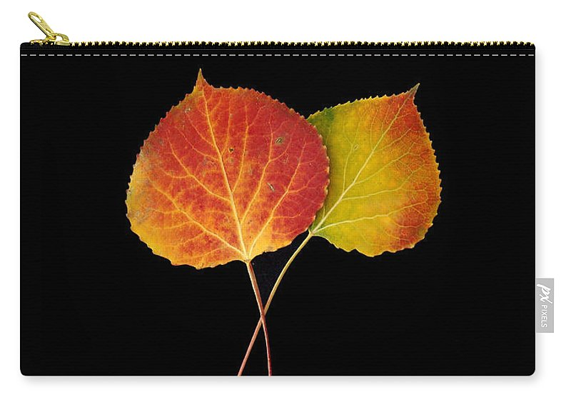 Leaves Carry-all Pouch featuring the photograph Aspen Leaves by Carol Milisen