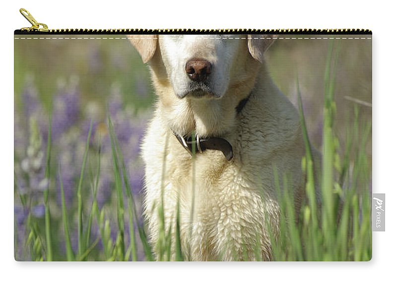 Dog Carry-all Pouch featuring the photograph At Attention by Jim And Emily Bush