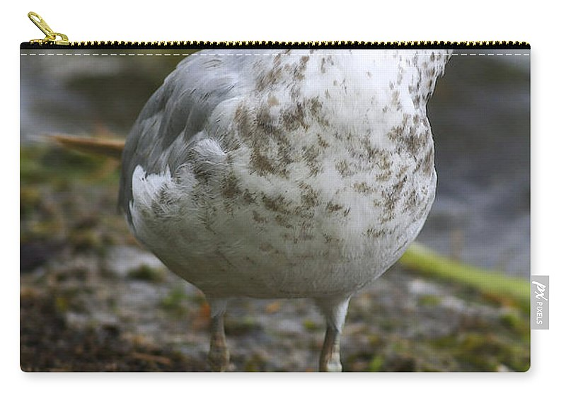 Bird Carry-all Pouch featuring the photograph At The Beach by Deborah Benoit
