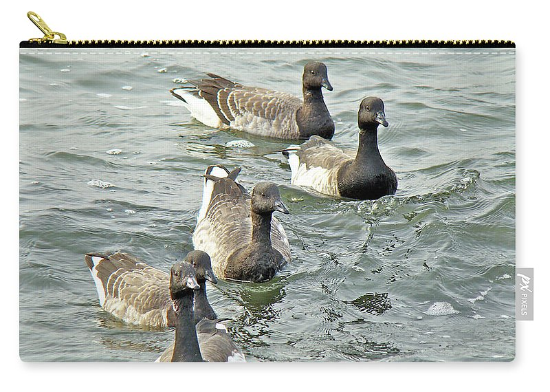 Geese Carry-all Pouch featuring the photograph Atlantic Brant Geese - Branta Bernicla Hrota by Mother Nature