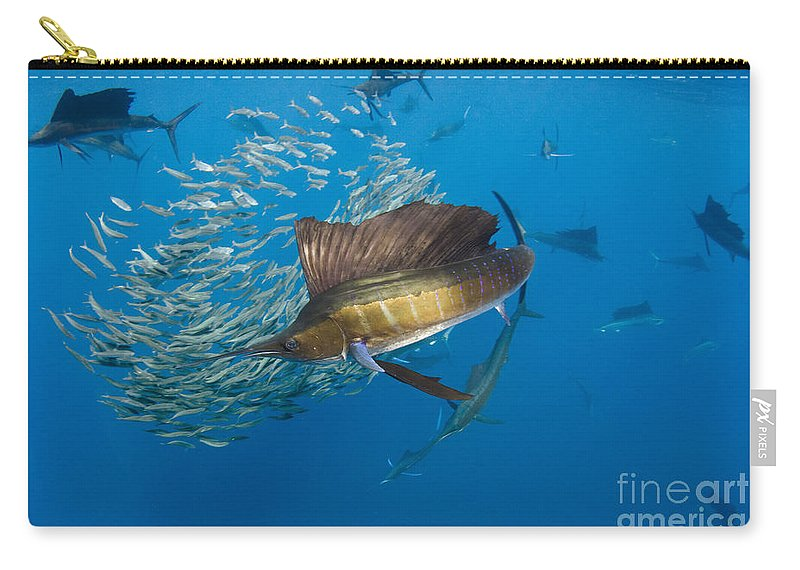 00456229 Carry-all Pouch featuring the photograph Atlantic Sailfish Hunting by Pete Oxford