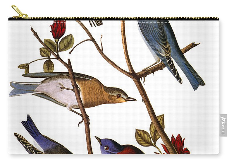 1838 Carry-all Pouch featuring the photograph Audubon: Bluebirds by Granger