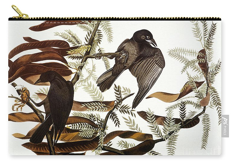1838 Carry-all Pouch featuring the photograph Audubon: Crow by Granger